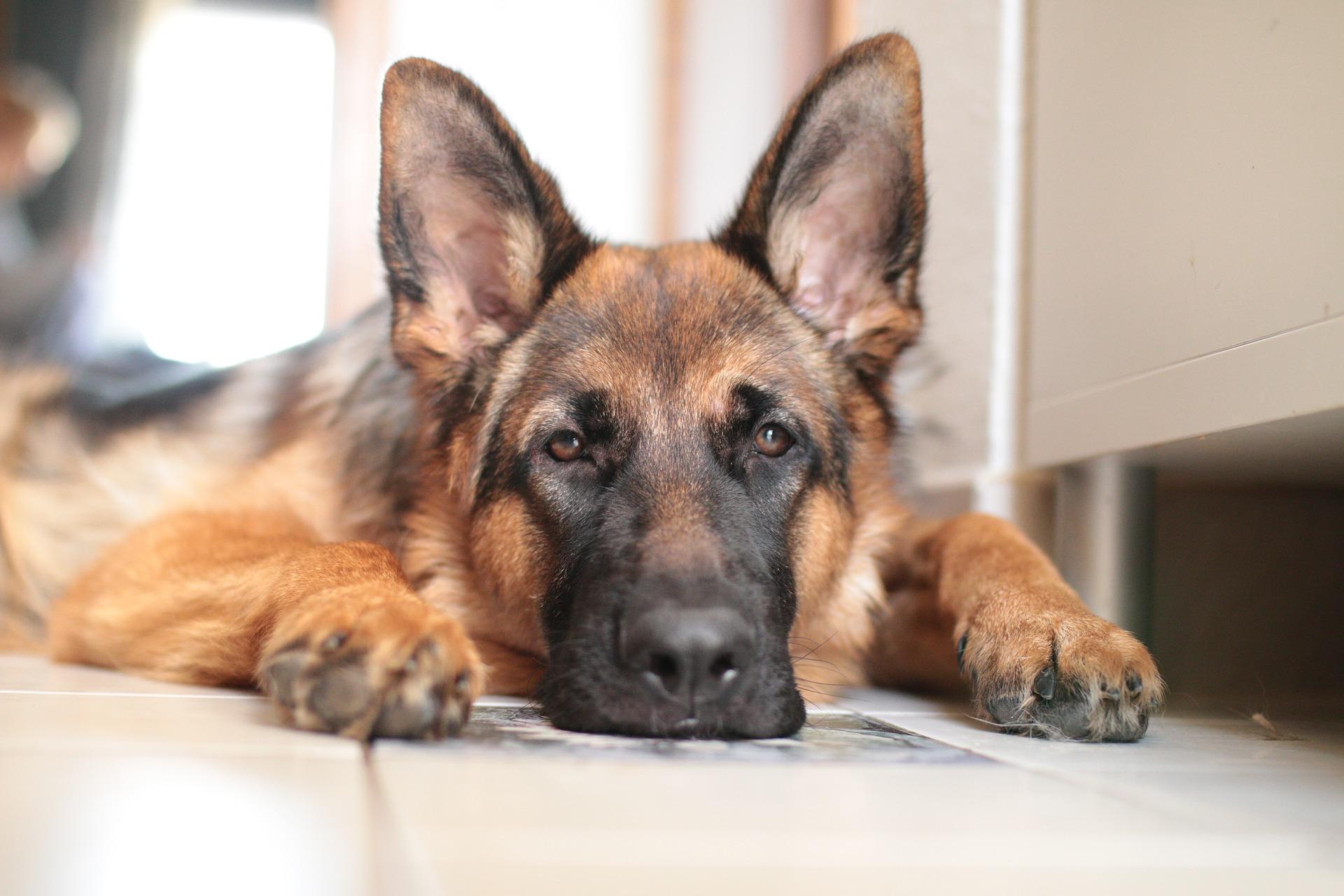 Odanost psa prema čovjeku: Miška godinama živi na mjestu gdje je poginuo njegov vlasnika